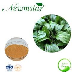 L'extrait naturel de la banane plantain Herb poudre/Plantain de semences de la poudre de Shell/Plantaginis Extrait de sperme avec certificat ISO9001
