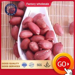 Noyau séchés arachides Arachides Raw/Arachid rouge fraîche de la peau pour la vente