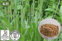 100% натуральные Plantain извлечения -4: 1 (CAS № 84929-43-1)
