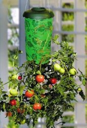 De Chaotische Planter van de tomaat (TP001)