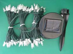 태양 끈 빛 - 나무 빛 (ZY-303)