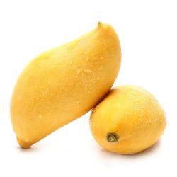 Natürlicher Pflanzenextrakt Mango SD Pulver Kräuter
