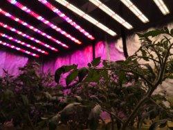 Для использования внутри помещений 600W/800 Вт/1000W гидропонное огородничество парниковых полный спектр лампы растений газа светодиодный индикатор для роста Microgreens Салат