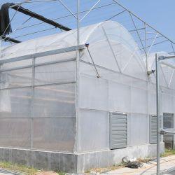 Multispan Tunnel-Plastikfilm-Deckel Greenhousefor, das Pilz pflanzt