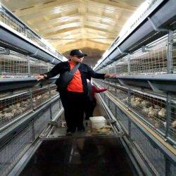 Gegalvaniseerde automatische 4-laags batterij Meat Chicken-voedingskooi voor Pluimveehouderij/ Landbouwvleeskuikenraising