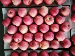 Yantai Peper Manzana Fuji Bolsa de exportación a Nepal