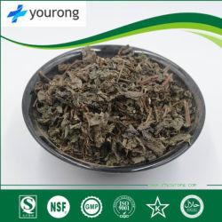 약에서 사용되는 훌륭한 의약의 값어치를 가진 Perilla Frutescens 잎
