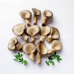 Основная часть упаковки закуски во всех возрастных людей Vf Устричный гриб