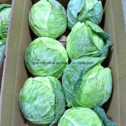 Carton de légumes chinois de haute qualité à long fraîches du chou blanc vert