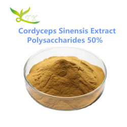 الكورديسيبس الطبيعي مستخرج سينسيس مسحوق 50% بوليسكاريد
