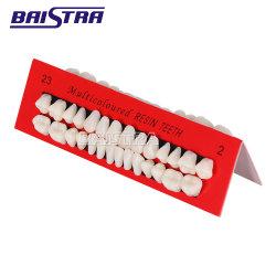 Modelo de Enseñanza/Dental Dientes dientes de plástico modelo