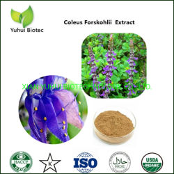 Coleus Forskohlii Forskolin 20% стандартных извлечения для снижения веса