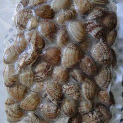 Bouilli avec shell clam