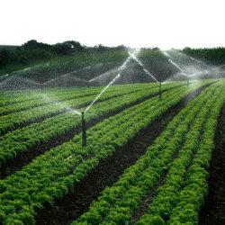 El polvo de aminoácido compuesto de fertilizantes en los cultivos orgánicos