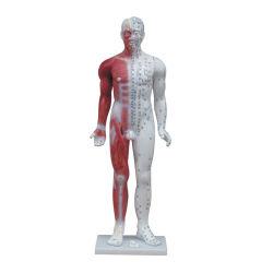 Anatomía Professional 84cm de acupuntura médica &Modelo muscular