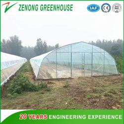 Solaire naturel automatique pour de plus en plus de légumes de serre en polyéthylène