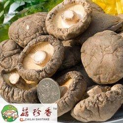 Premium lisse séchés champignon shiitake
