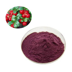 Cranberry-Extrakt 99% Cranberry-Fruchtpulver Cranberry-Konzentrat-Pulver