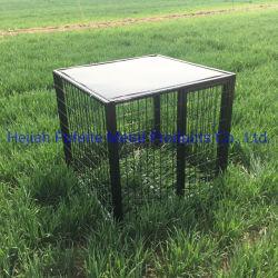 Animal élevé des métaux lourds et le chien des cages pour animaux de compagnie