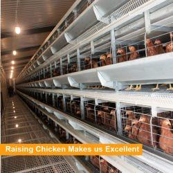 Tianruiデザイン熱いすくい販売のための電流を通された鋼鉄Hのフレーム自動電池の鶏の層のケージ