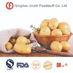 새로운 작물 중국에서 신선한 네덜란드 감자