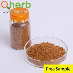Herb chinois extrait de racine de la médecine de l'angélique