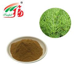 Usine extrait naturel d'alimentation de la Prêle 7 % de la silice