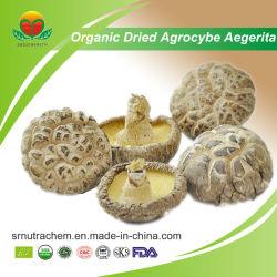 Fornecedor fabricante Agrocybe Aegerita secas orgânicos