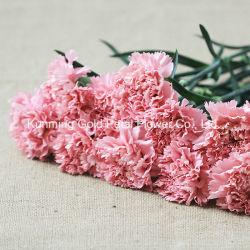 Декоративные Wholsales Лучшие подарки розового цвета свежие цветы Carnation резки