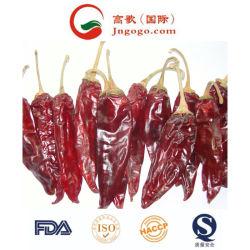 De nieuwe Amerikaanse Rode Spaanse peper van het Gewas