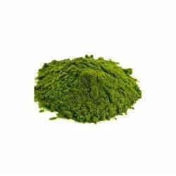 مصدر موثوق به في المصنع أعشاب عصير القمح الخام عشب القمح مسحوق