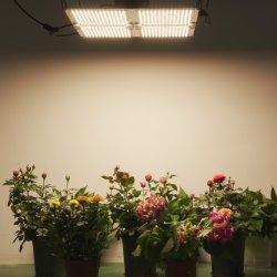 Full Spectrum 100W 200W 400W 480 W Horticultura LED Grow Light Para flores vegetais de planta