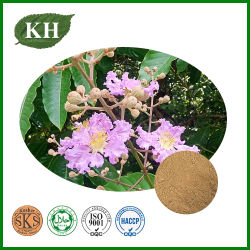 고품질 바바바 잎 추출물 - 코로세전 AICD 1% - 98%