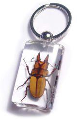 昆虫のKeychain黄色い雄鹿カブトムシ(SK71)