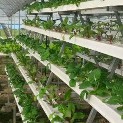 100x50mm de agua y fertilizantes de guardar el cultivo hidropónico Nft