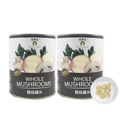 Halal Brc 쉬운 열려있는 소금물에 절ㄴ 통조림으로 만들어진 전체적인 버섯 중국어