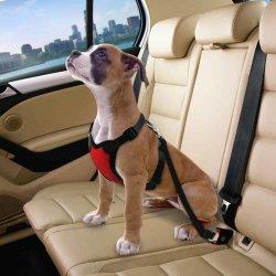 De Uitrusting van de Veiligheidsgordel van de hond/van de Kat. De Auto van de Veiligheidsgordel van de Veiligheid van het huisdier