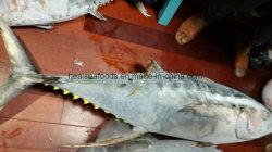 Замороженные Морепродукты пропустить домкрат W/R & тунца W/R
