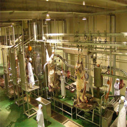 Matadouro/Abate de bovinos/Ferramenta de abate da Faca
