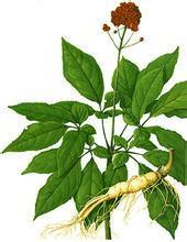 Extrato de folha de ginseng siberiano natural puro, extrato de ginsen