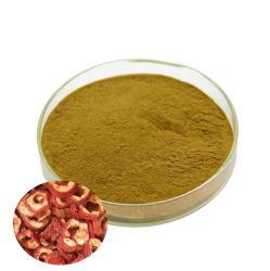 Les fruits secs de l'Aubépine extrait de 5 % Acide Maslinic