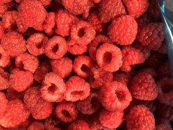 تصنيع Furits مجمدة، التوت البري المجمد IQF، الفواكه المجمدة، الطعام المجمد، مكون عصير الفاكهة أو المهروس