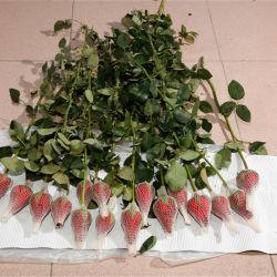 Kleurrijke Beschermende Bloemen die Plastic Netten verpakken