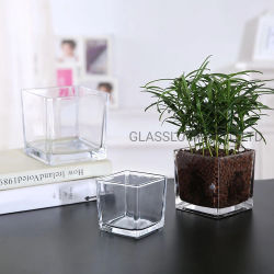 المصنع السعر المباشر التصميم البسيط الديكور المنزلي بالجملة زهرة المصنع مزهرية زجاجية صافية مربعة