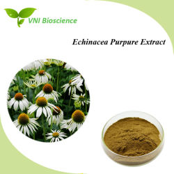 ISO SGSは100%の自然なEchinaceaのPurpureのエキスかEchinaceaのエキスを証明した
