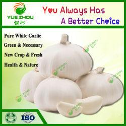 2020 Nova Colheita Normal/Pure Alho fresco com 5/6/7cm vegetais frescos provenientes da China