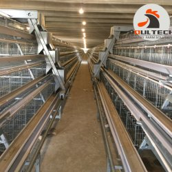 Gabbia del pollo della batteria del pollame usata azienda agricola su grande scala di strato da vendere