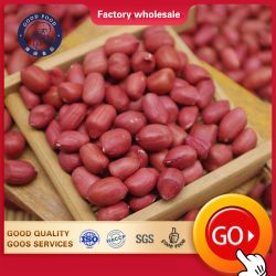 Цена Ex-Factory сушеные ядра арахиса Groundnut Raw/Arachid свежего красного цвета кожи для продажи
