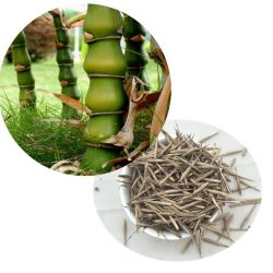 Fo du Чжу Будды новоприбывших bamboo Bambusa ventricosa семян семена