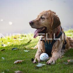 E-TPU 製の Bite Prudutダクト 用の Pet Dog Toy Ball タヒチシリーズ